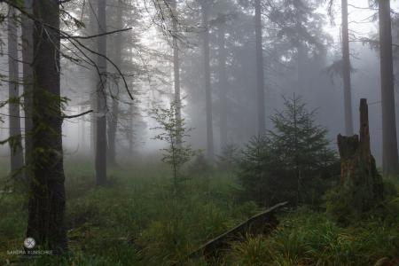 Wald forest fog Nebel Herbst autumn fall