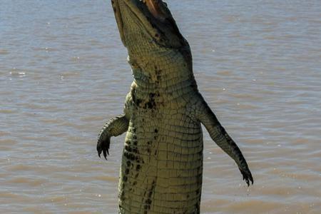 australia, australien, northern territory, darwin, crocodile, kakadu national park
