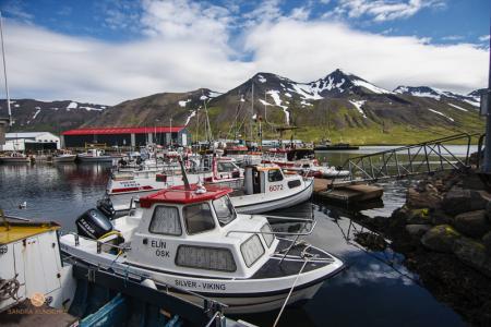 Hafen, Siglufjörður, Nordisland, Island