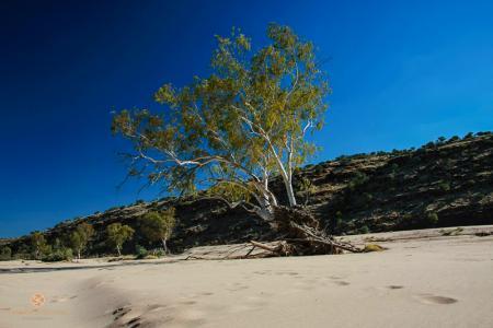 australia, australien, northern territory, Finke Gorge NP